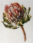 King Protea
