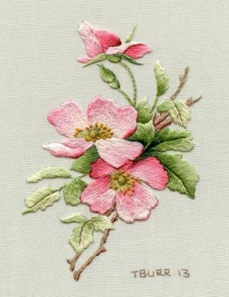 Briar Rose R195