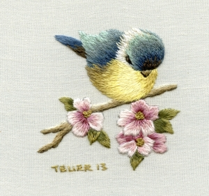 Blue tit and apple blossom