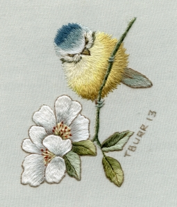 Blue tit & WIld Rose