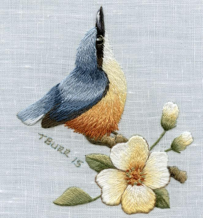Nuthatch In Spring Class Project