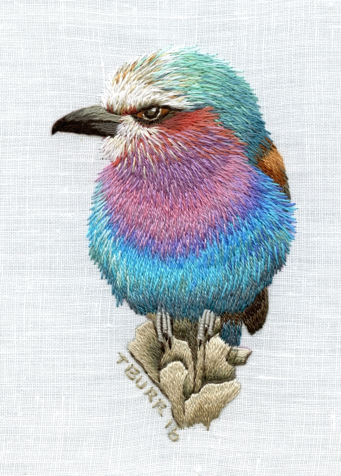 Little Lilac Breasted Roller Portrait