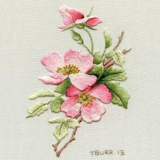 briar rose 1