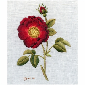 french rose4