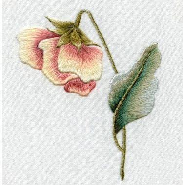 victorian pansy2